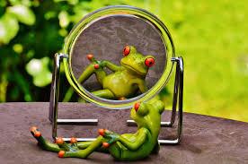 spiegelsprookje kikker in diepgaand gesprek