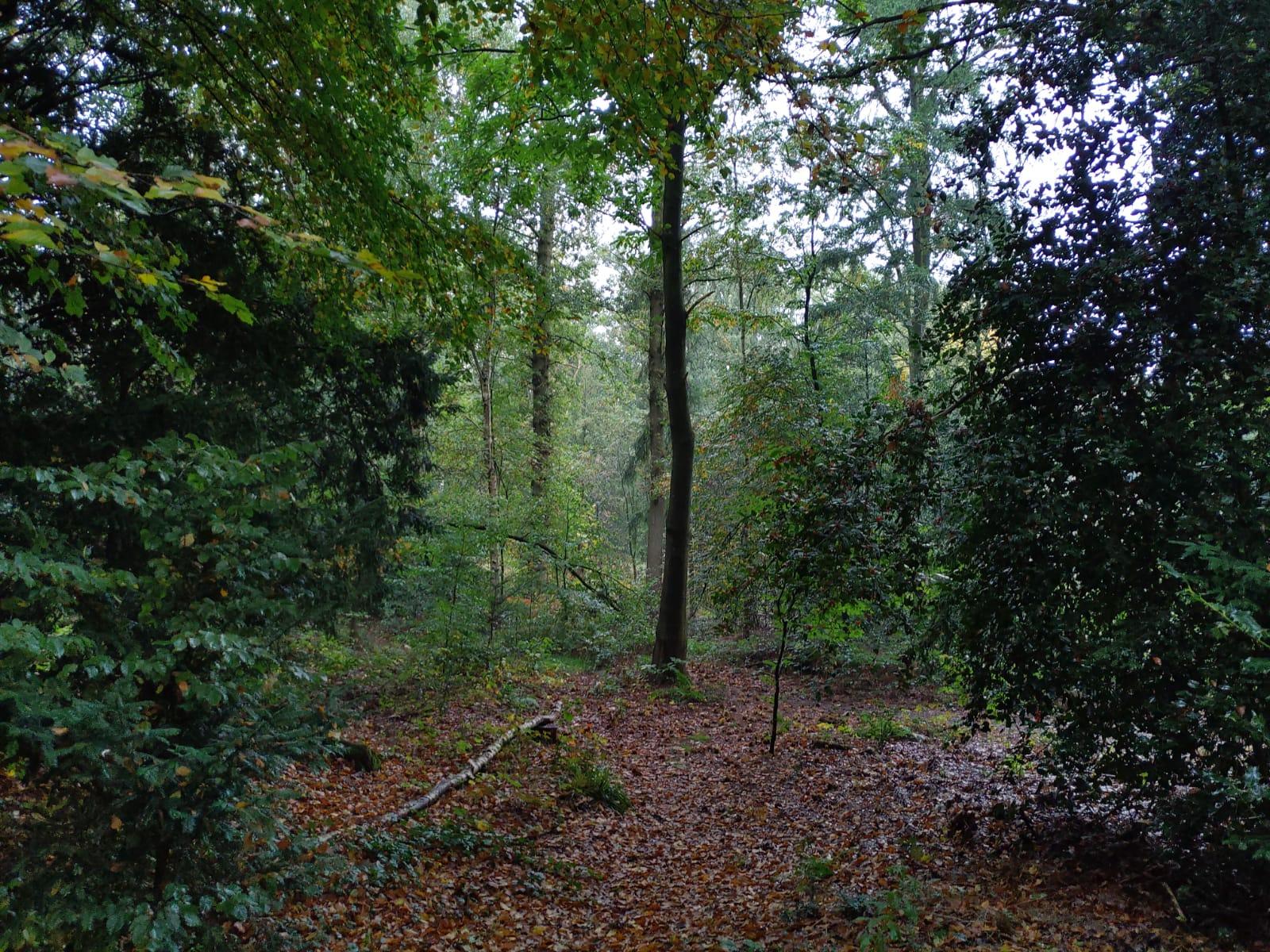 Prachtig stil bos bij de Oxerhof